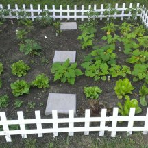 My little kitchen garden, growing every day!