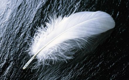 white-feather-1935